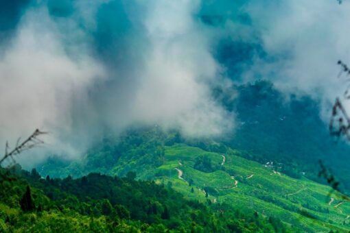 Kalimpong Packages
