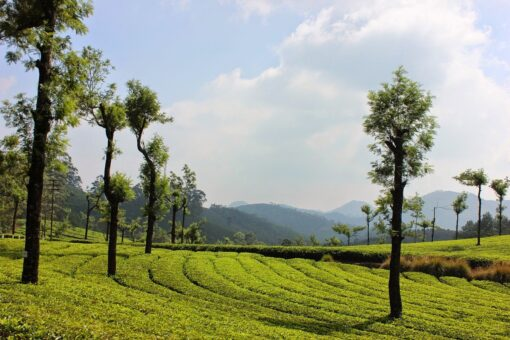 Munnar Thekkady Kerala Packages